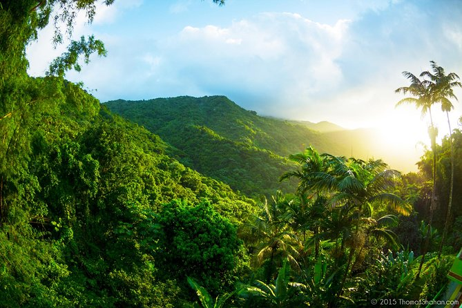 Small Group Tour - El Yunque Rainforest - Off The Beaten Path