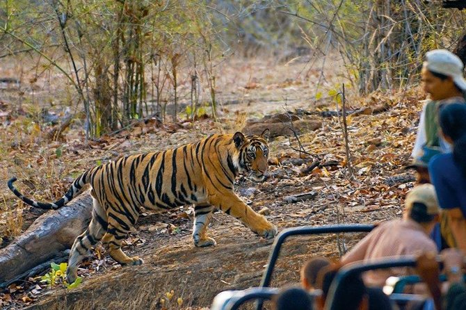 7 Days Bandhavgarh Tour