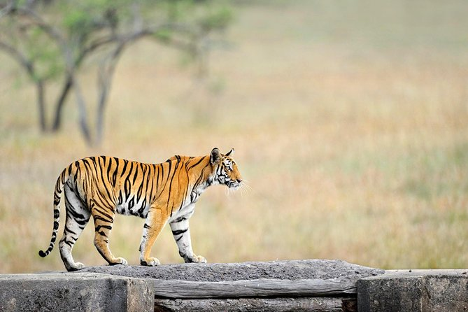 6 Days Bandhavgarh Wildlife Tour