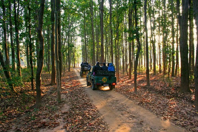 Bandhavgarh Tour with Kanha National Park