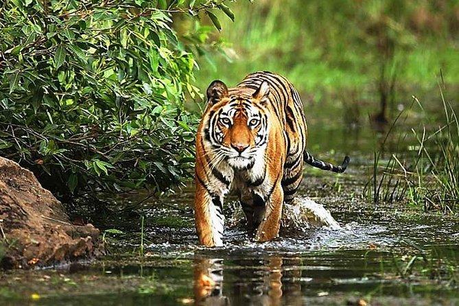 3 Days Bandhavgarh Tiger Safari Tour