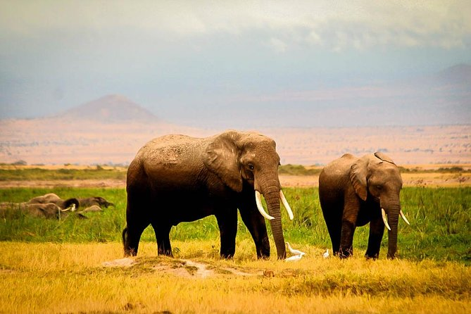 3-Day Amboseli safari from Nairobi photo 1