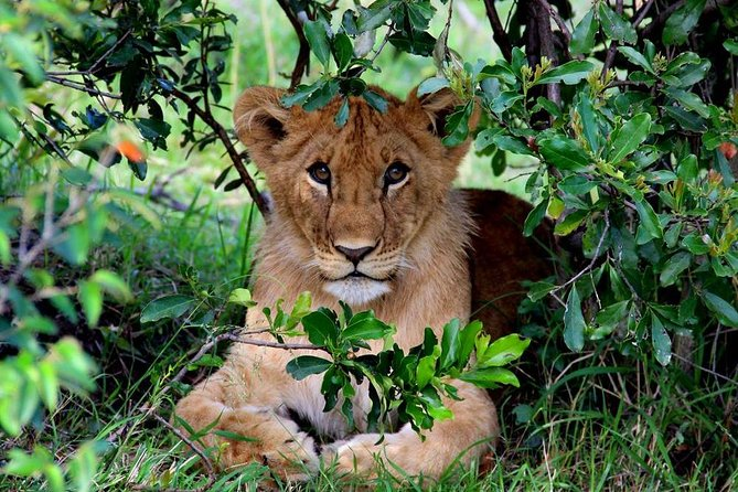 3-Day Masai Mara Private Safari from Nairobi