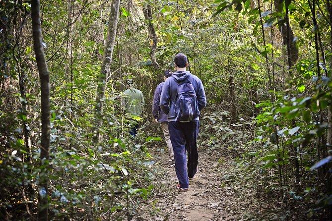 Tour Ecológico Privativo para a Serra da Cantareira ou Parque Estadual do Pico do Jaraguá (4 horas)
