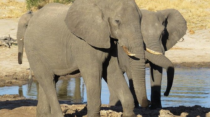 Hwange Day Trip From Victoria Falls