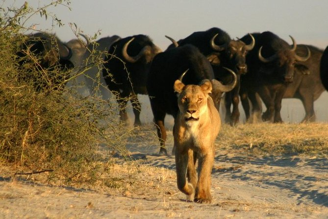 3-Day Chobe National Park Camping Safari from Victoria Falls photo 2