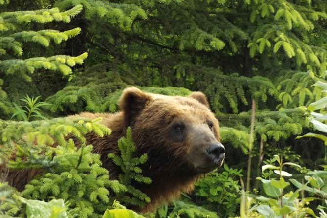 Chichagof Island Tour: Brown Bear Search