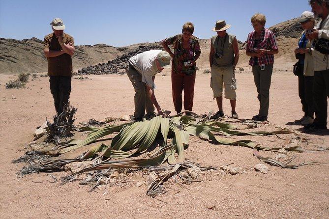 Welwitschia Tour från Swakopmund