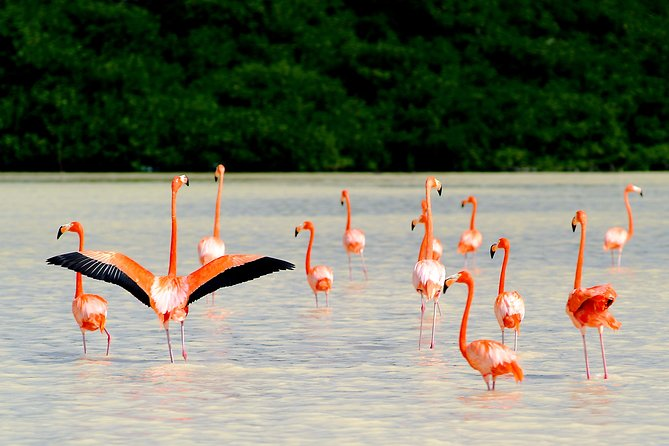 5 Days of Flamingos, Henequen and Mayan Culture in a 3 Star Hotel