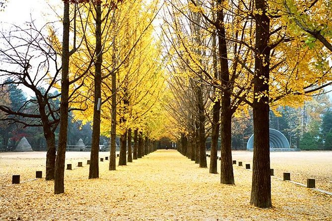 Petite France and Nami Island Full-Day Tour from Seoul photo 2