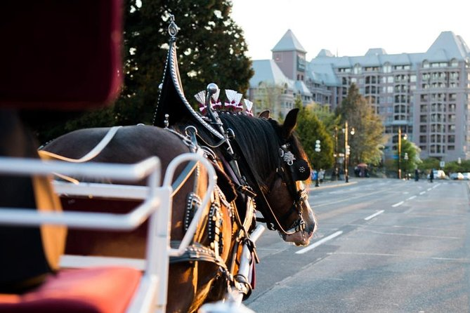 60-Minute Deluxe Horse-Drawn Carriage Tour photo 1