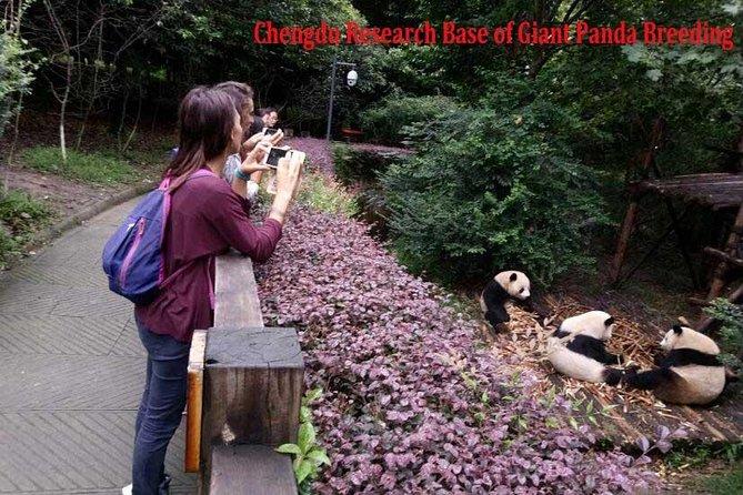 Excursión privada de medio día: base de investigación de Chengdu de cría de pandas gigantes