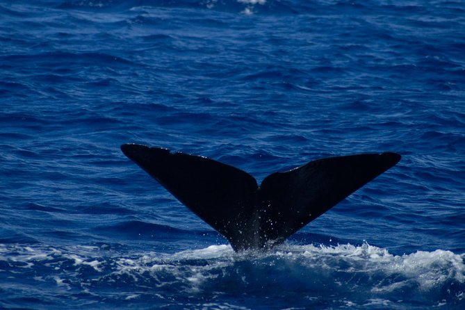 waitukubuli-en-dominique-observation-des-dauphins