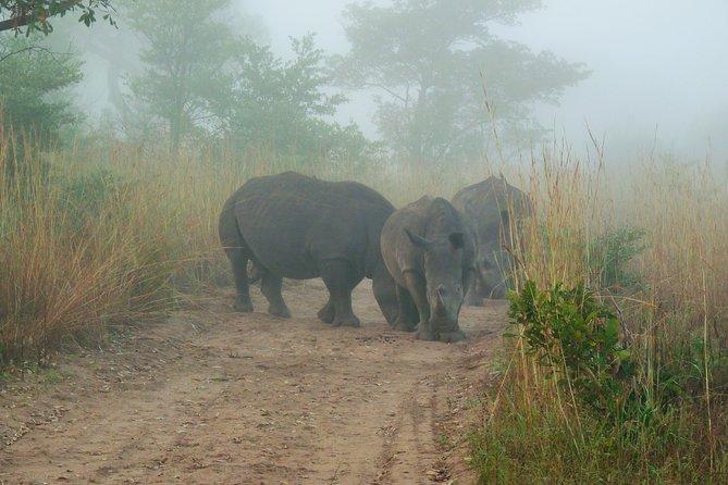 Parc national Kruger Matin Game Drive de Hazyview