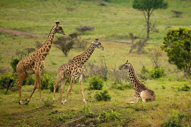 Arusha National Park Guided Day Tour from Arusha
