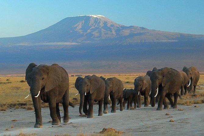Overnight Safari to Amboseli National Park