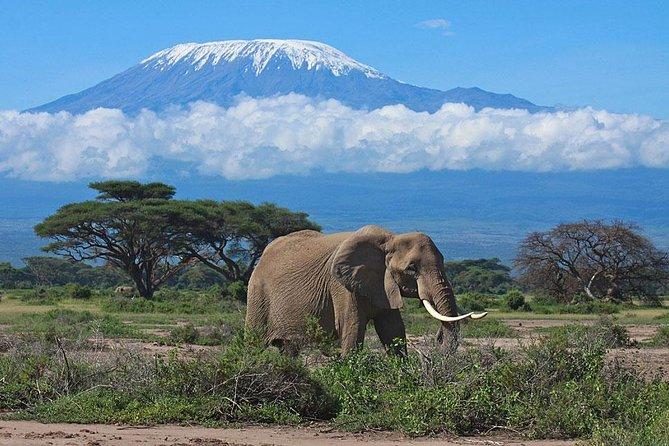 7-Day Maasai Mara, Lake Nakuru, Lake Naivasha and Amboseli Safari from Nairobi