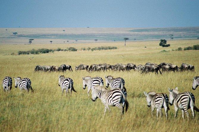4 Days Group Joining Budget Safari To Masai Mara And Lake Nakuru National Park