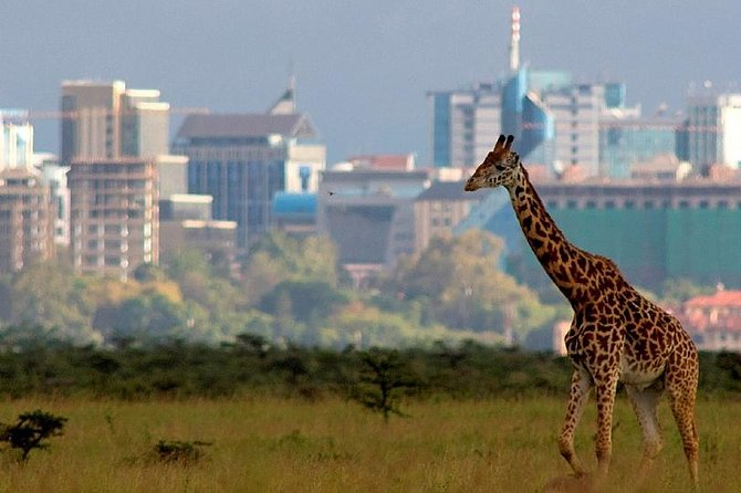 Nairobi National Park Wildlife Capital & Carnivore Restaurant Lunch