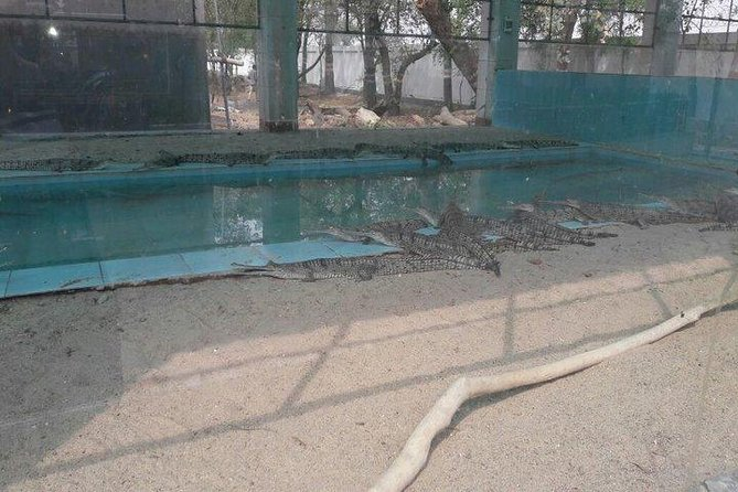 Gharial (alligator) eco park with Machkund temples visit
