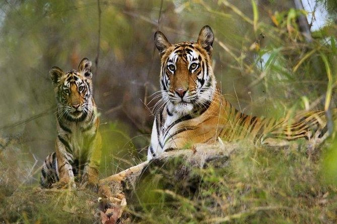 Excursion to Panna Tiger Reserve with Evening Visit of Kama Sutra Temples