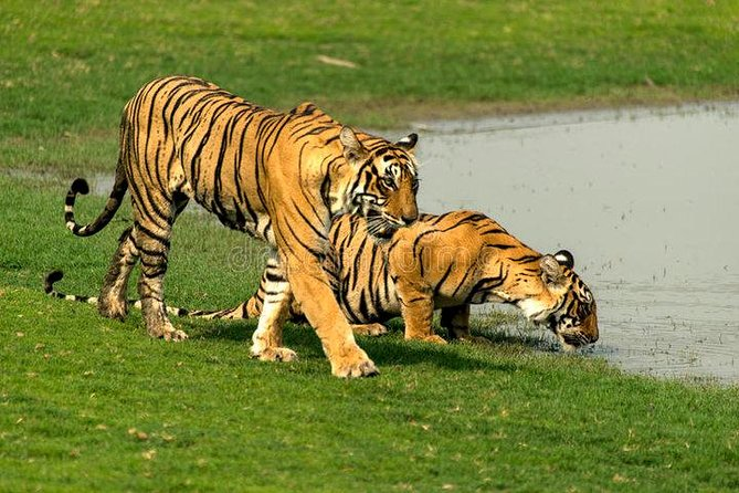 Ranthambore National Park Day Tour from Jaipur