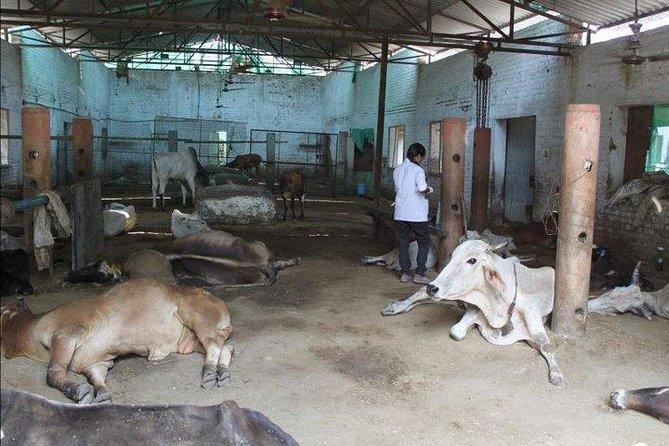Visit to A Street Dog Rehabilitation Center Along with Taj Mahal Day Tour