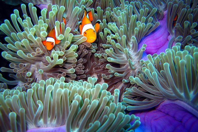 Try Diving in the beautiful Andaman Sea photo 6