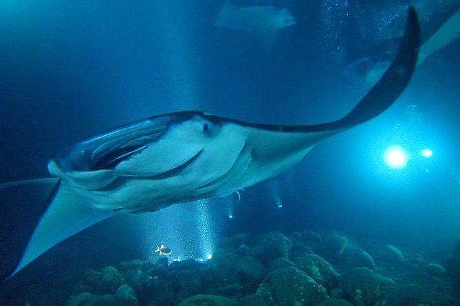 Night Mantaz Snorkel 2019 - Big Island of Hawaii - Viator