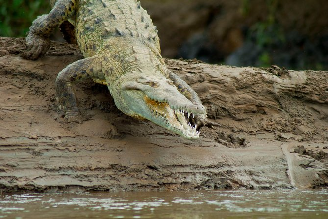 Crocodile River Cruise from Jaco photo 1