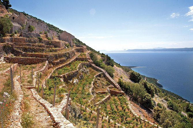 Peljesac Vineyards - Private Excursion from Dubrovnik with Mercedes Vehicle