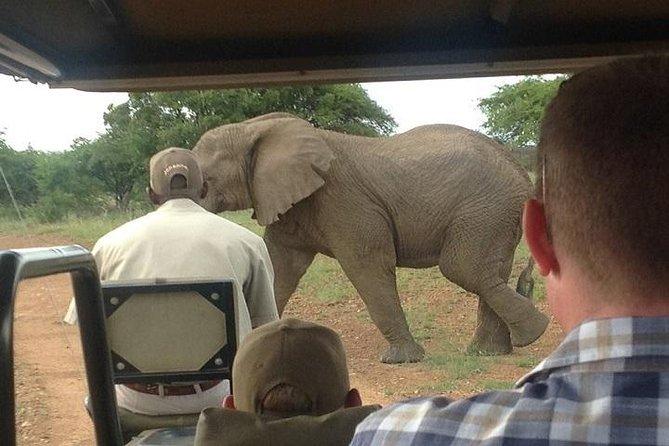 1- Day Big -5 Safari Morning or Evening