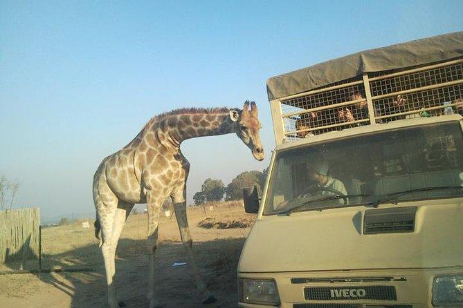 Full Day Safari Experience From Johannesburg With Ziplining