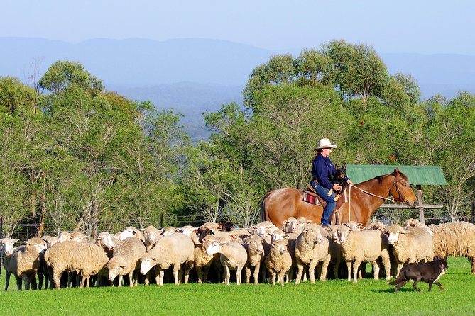 Tobruk Sydney: Farm and Australian Outback Experience