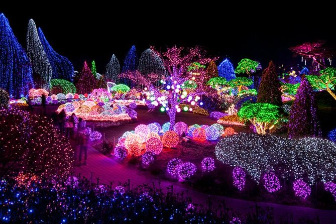 Day Tour to Nami Island Petite France and Lighting Festival