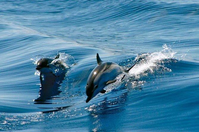 Gibraltar Dolphin Adventure
