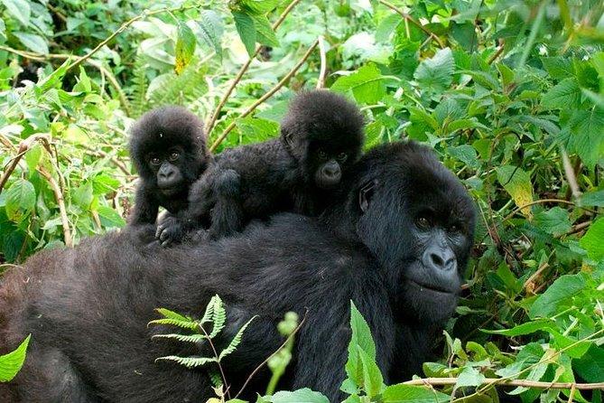 3 Days Bwindi Gorilla Trekking tour