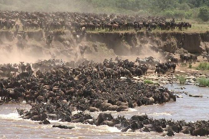 3 Day Masai Mara safari