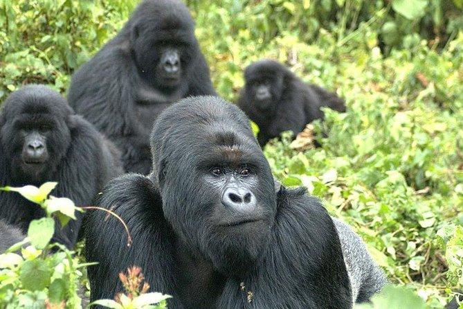 5 Day Rwanda gorilla and Lake Kivu Safari