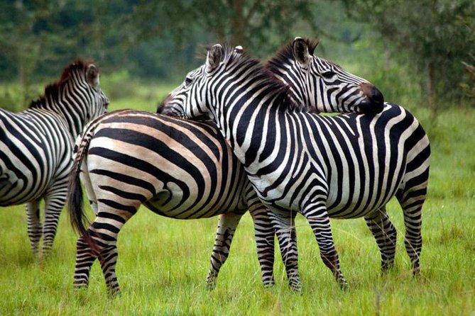 4 Days Queen Elizabeth & Lake Mburo Savanna Safari