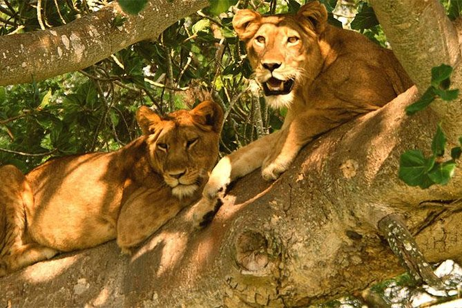 5 Days Bwindi gorilla trekking and Queen Elizabeth safari