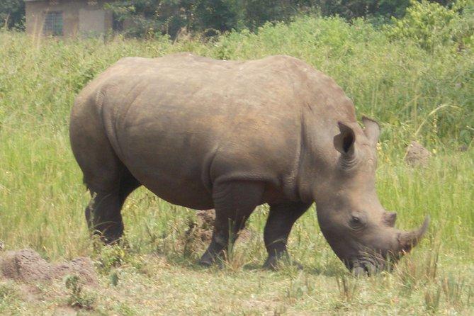 1 Day ziwa Rhino tracking trip