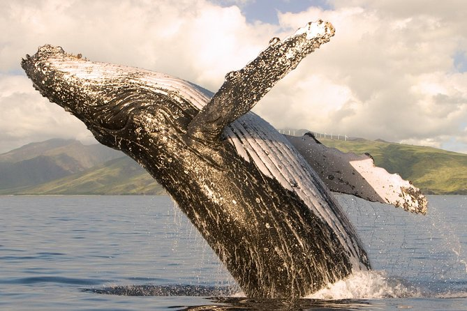 Whalewatch Sail Deluxe Tour from Lahaina