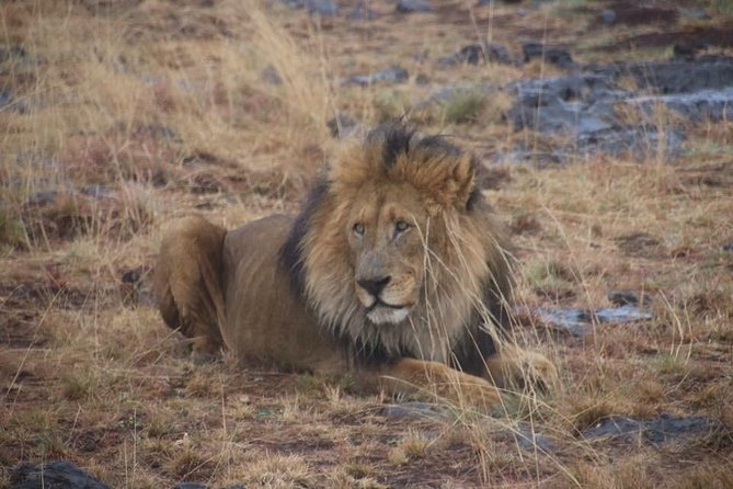 Kruger National Park Full Day Game Drive photo 2