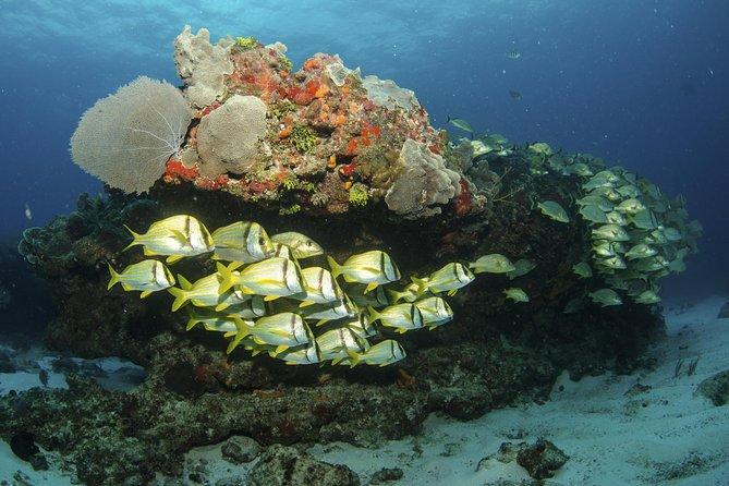 Aruba 2-Tank Dive Experience
