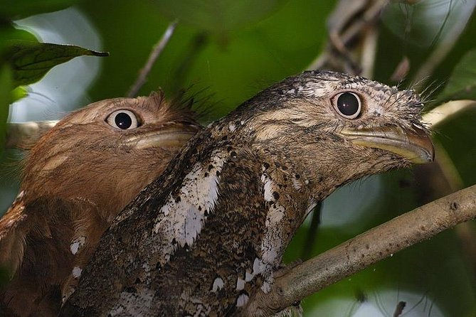 Kerala Bird Watching Tour