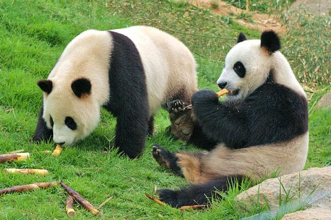 Private Chengdu Impression Day Tour including Panda Base