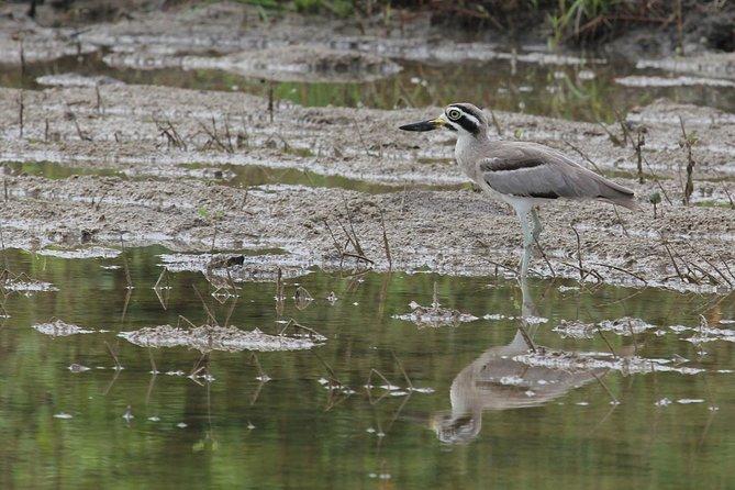 Bundala National Park Shared Safari
