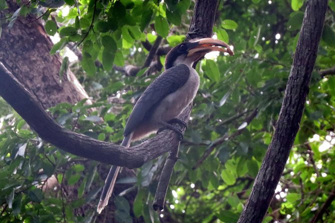 Birdwatching Trek in Sigiriya Countryside (Private 2-hour trek) photo 1