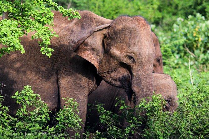 Udawalawe National Park Safari from Yala